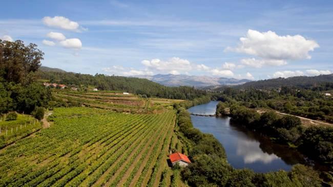 Vinícola da região dos Vinhos Verdes