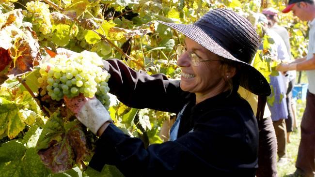 Viticultora portuguesa em vinícola da região dos Vinhos Verdes