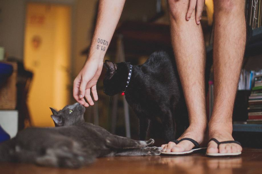 O fotógrafo Lucas Landau com seus gatos