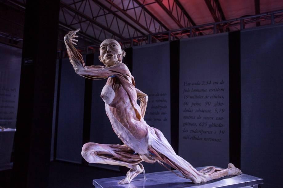Human Bodies – Maravilhas do Corpo Humano