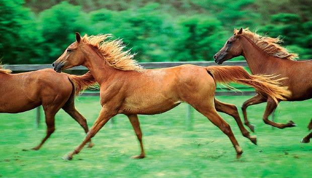 cavalos.jpeg