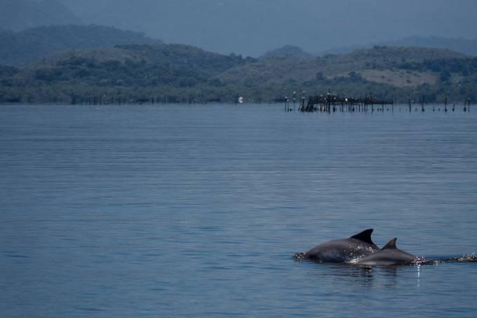 golfinhos_lemos-2928.jpeg