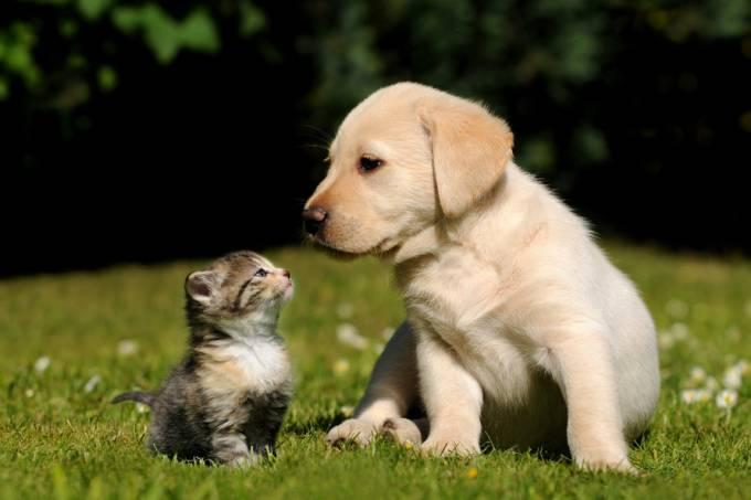 filhotes-cachorro-gato.jpeg