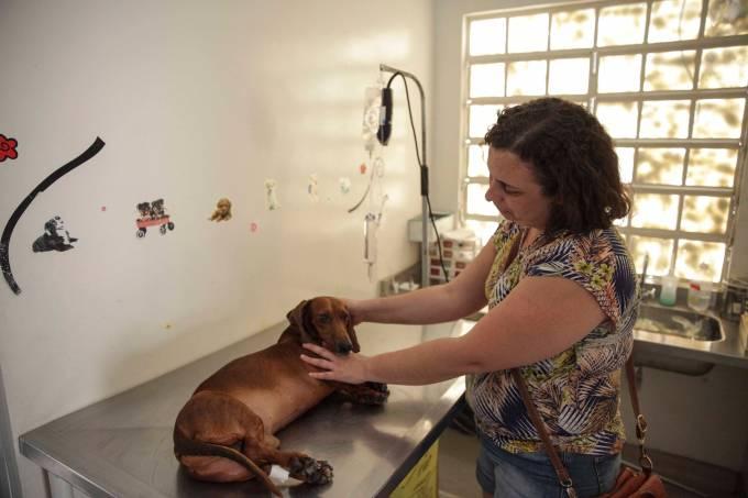 cachorro-veterinario.jpeg