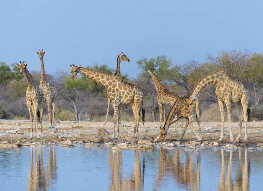 O jovem país africano tem habitats preservados e vida selvagem digna de documentários do Discovery Channel