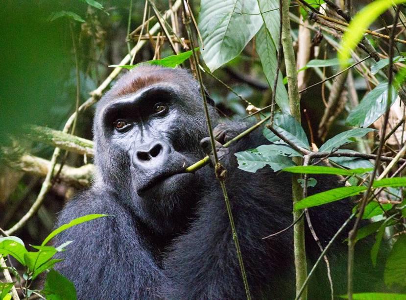 A exuberante floresta tropical tem tudo para fazer do Congo um polo turístico