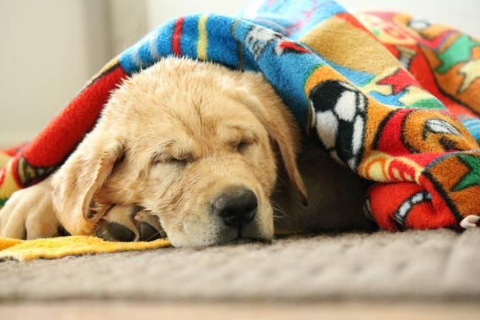 cachorro-cobertor.jpeg