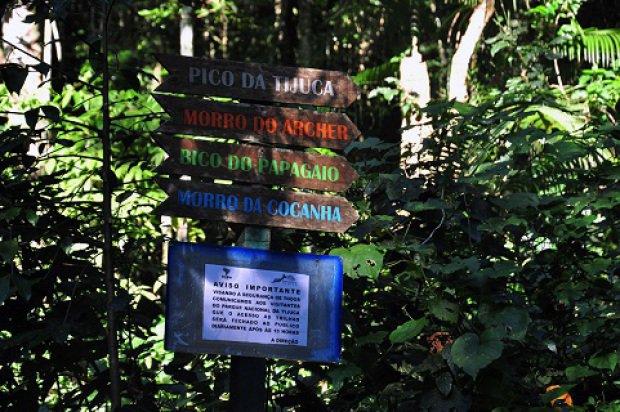 floresta_tijuca_alexandremacieira.jpeg