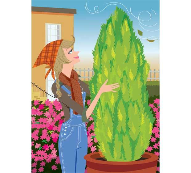 """Um dos piores inimigos das plantas são os ventos, que arrancam folhas e galhos, levam a terra embora e derrubam vasos. No inverno, eles se tornam ainda mais potentes. """"O vento sudoeste costuma ser o prenúncio de geadas"""", alerta Raul Cânovas. Para proteger<br>"""