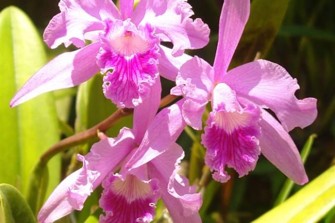 Orquídea no Jardim Botânico