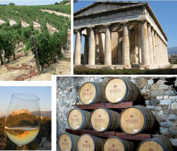 ed-enoturismo-vinicola-vinhedo-atenas-copo