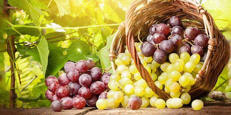 foto tipos de uvas