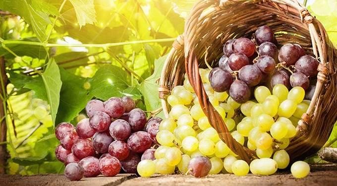 foto-tipos-de-uvas
