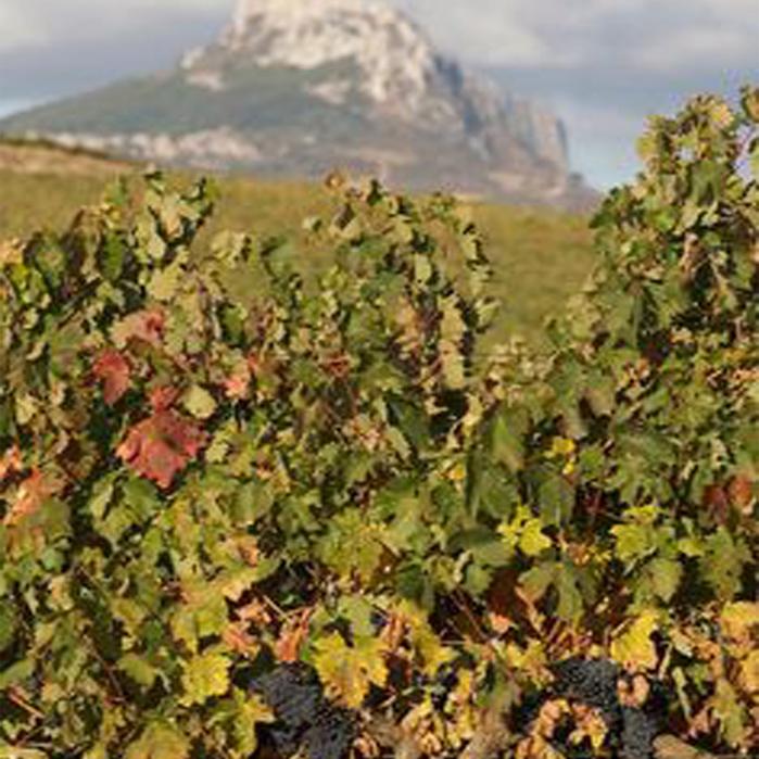 Rioja 3