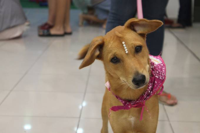 cachorro // cão // cao // adoção // pet FEIRA DE ADOÇÃO NO CENTER SHOPPING RIO (2)
