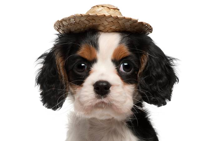 cão // cachorro