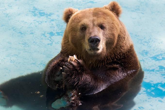 Urso – zoo