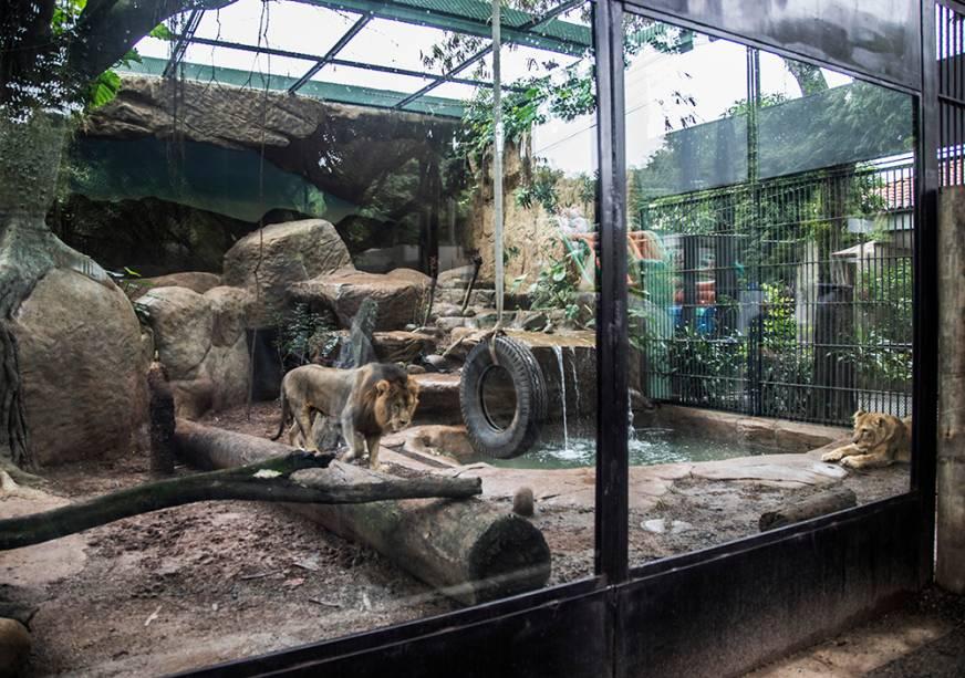 Desde a concessão, em outubro, uma série de melhorias foram realizadas. O recinto dos leões ganhou painéis de vidro blindado