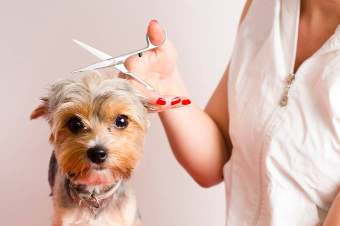 Dog getting groomed at professional salon