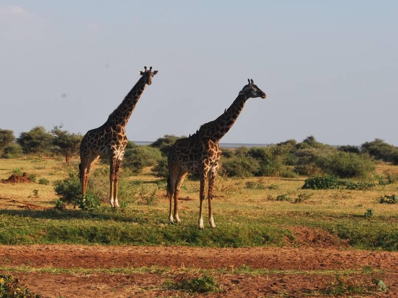O parque Serengeti