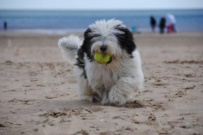 cachorro na praia