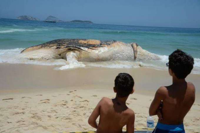 baleia-tomaz