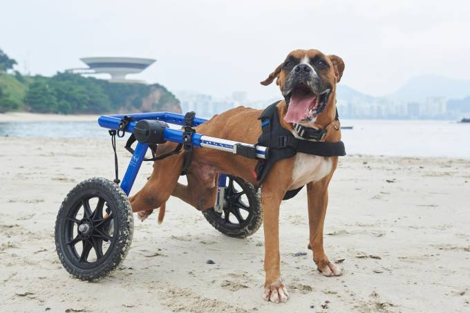 03.03.2018Marley  na praia da Boa Viagem, NiteróiFoto: Selmy Yassuda