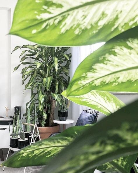 Apartamento 921, na Lapa e no Instagram (@apartamento921): sala de estar ou floresta?