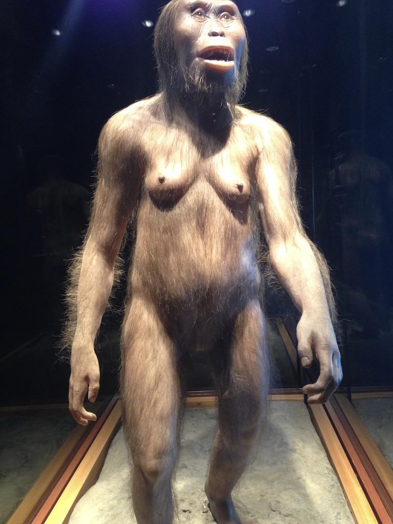 imagem de Lucy no museu antropológico