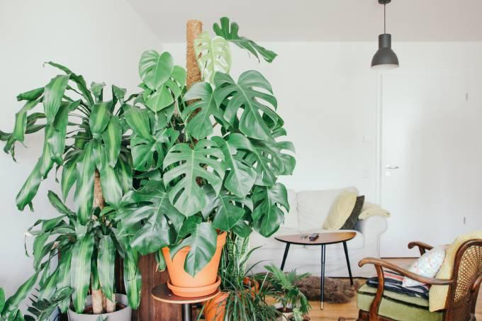 Plantas em casa – decoração