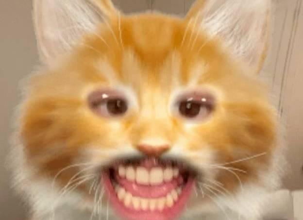 foto gato pipi