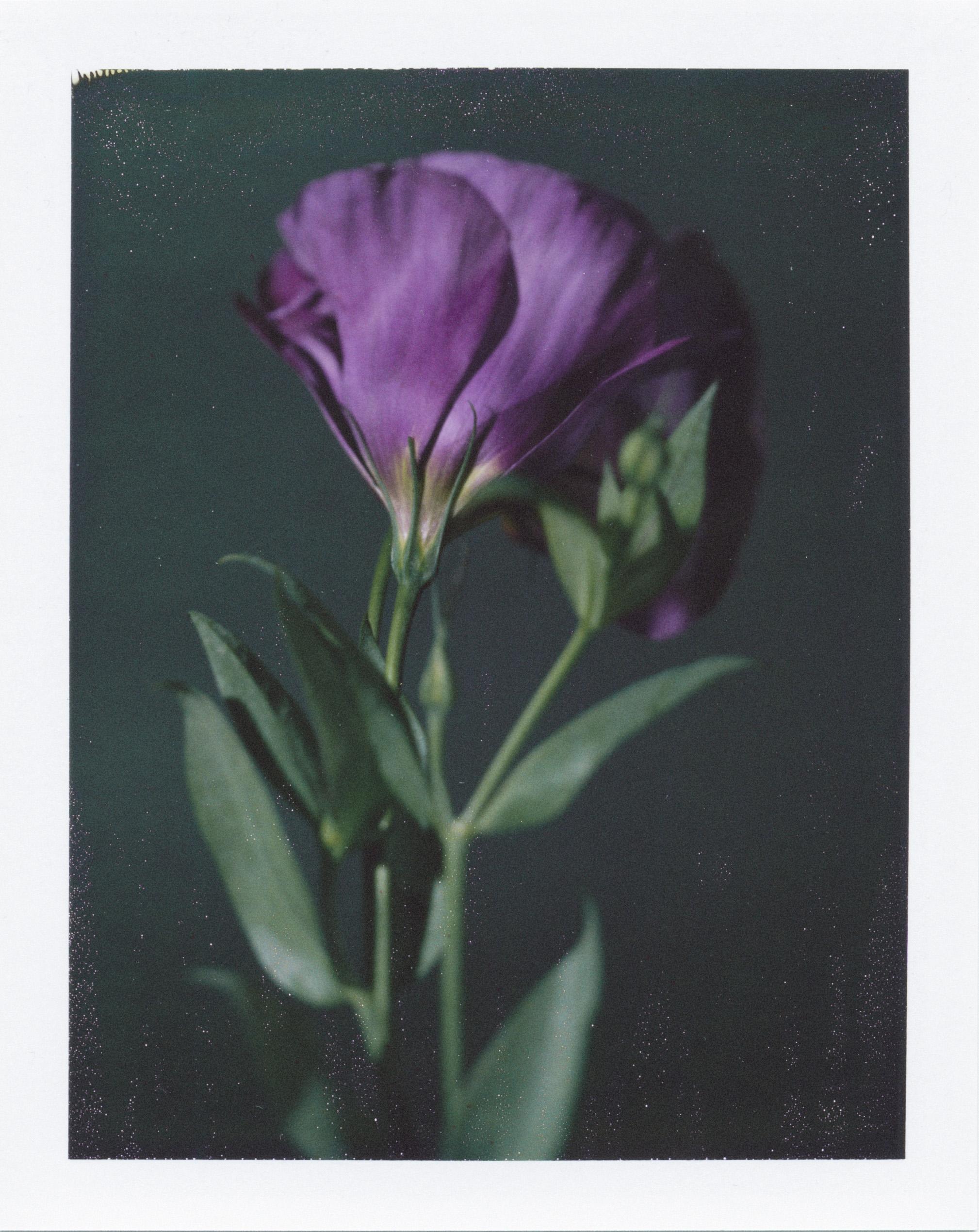 Pedro Pinho: a beleza de uma flor prestes a ser despedaçada