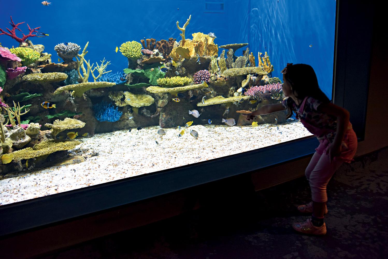 criança em frente a um dos aquários do AquaRio. Há corais em tons de rosa, azul e amarelo na foto e peixinhos pequenos, de várias cores