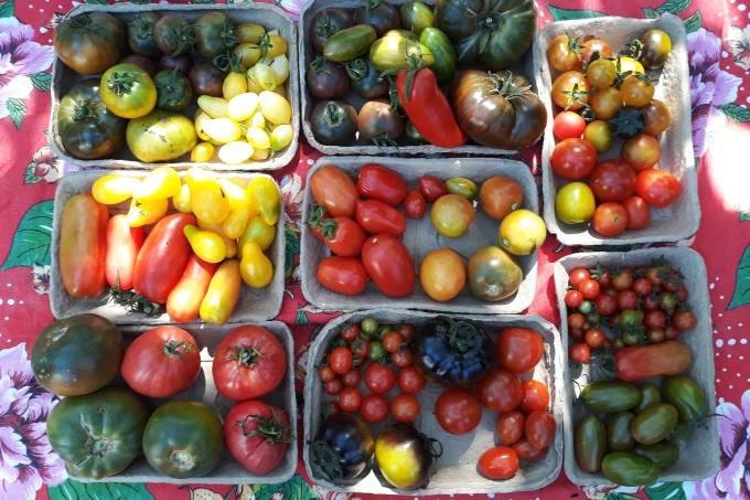 Foto 1 – frutas