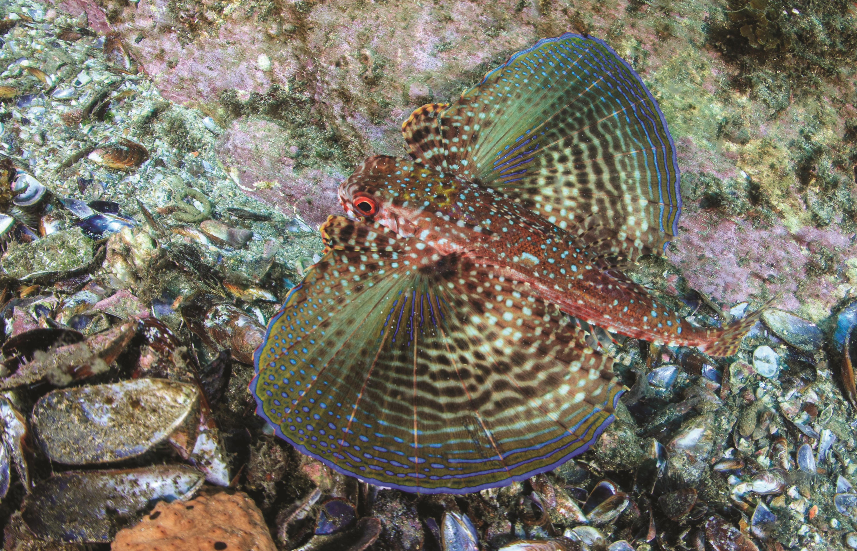 peixe multicolorido no fundo do mar
