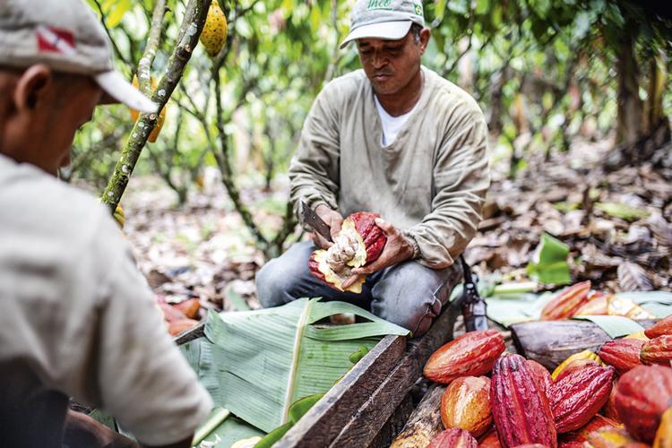 Produção própria: desde 2020, a Cacau Noir tem uma fazenda na Bahia -