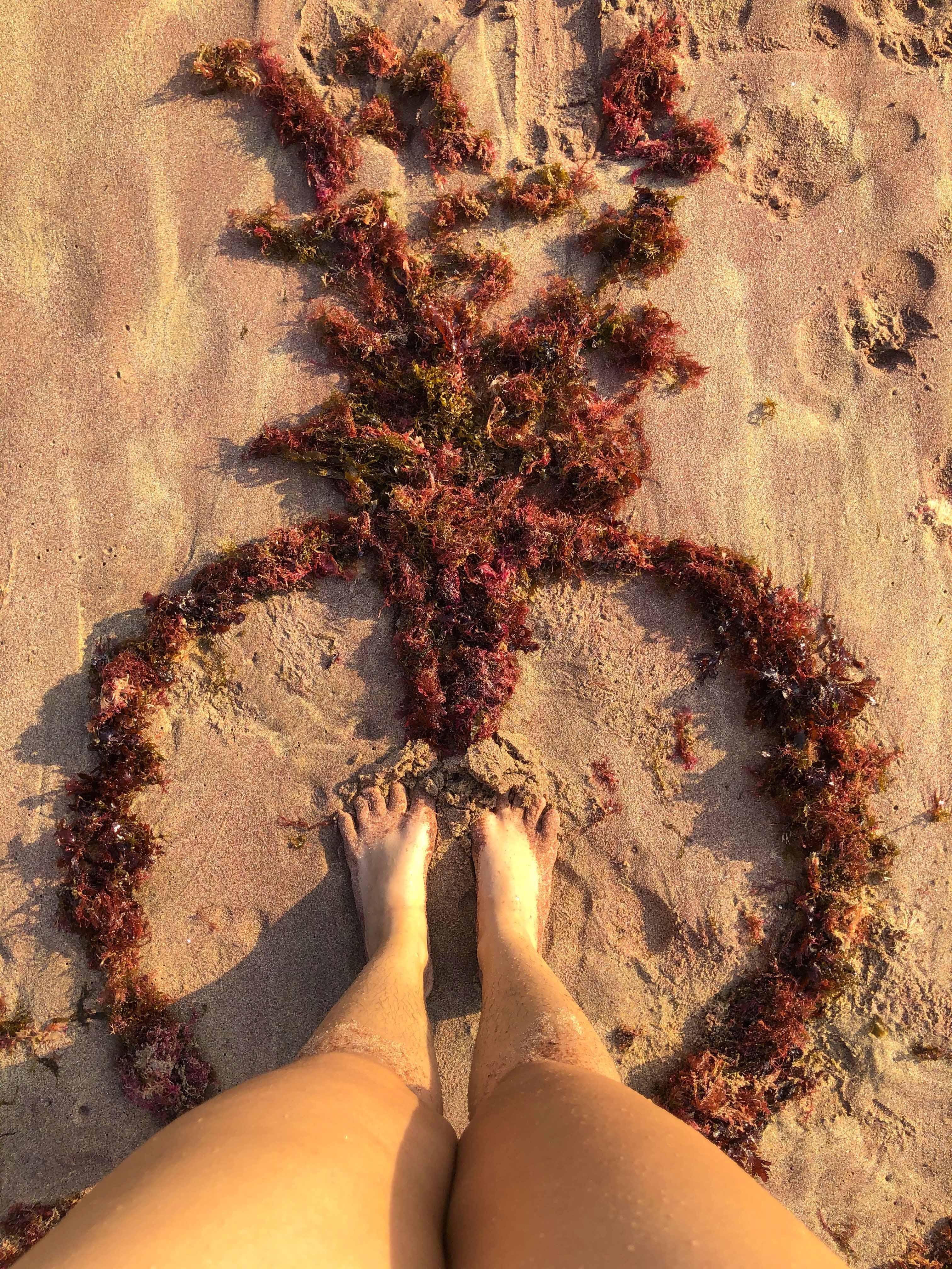 pernas de mulher na areia da praia, cercada por algas vermelhas