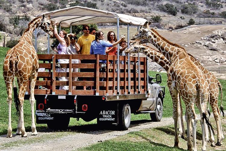 O famoso zoológico de San Diego, na Califórnia: um dos pioneiros no conceito de exibição dos bichos ao ar livre e inspiração para o BioParque do Rio -