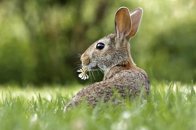Tempo de Páscoa: fazendas urbanas para visitar coelhinhos e outros animais