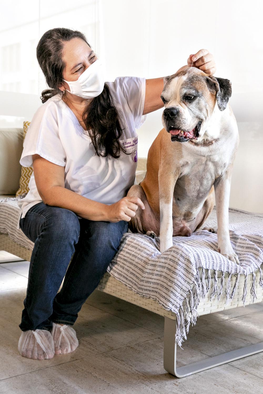 O boxer Zeca: após a ozonioterapia, ele segue com a acupuntura -