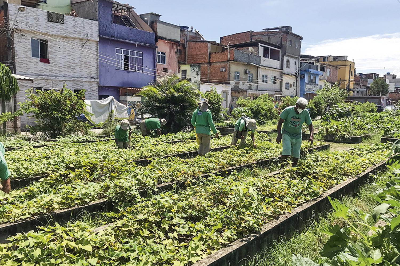 O projeto Hortas Cariocas, subordinado à Secretaria Municipal de Meio Ambiente, mantém espaços de cultivo em 49 localidades da cidade — a produção de hortaliças passou das 80 toneladas em 2020 e é toda doada em tempos de pandemia