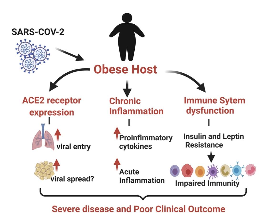 Como a obesidade pode reduzir a resposta imune à vacina Covid-19
