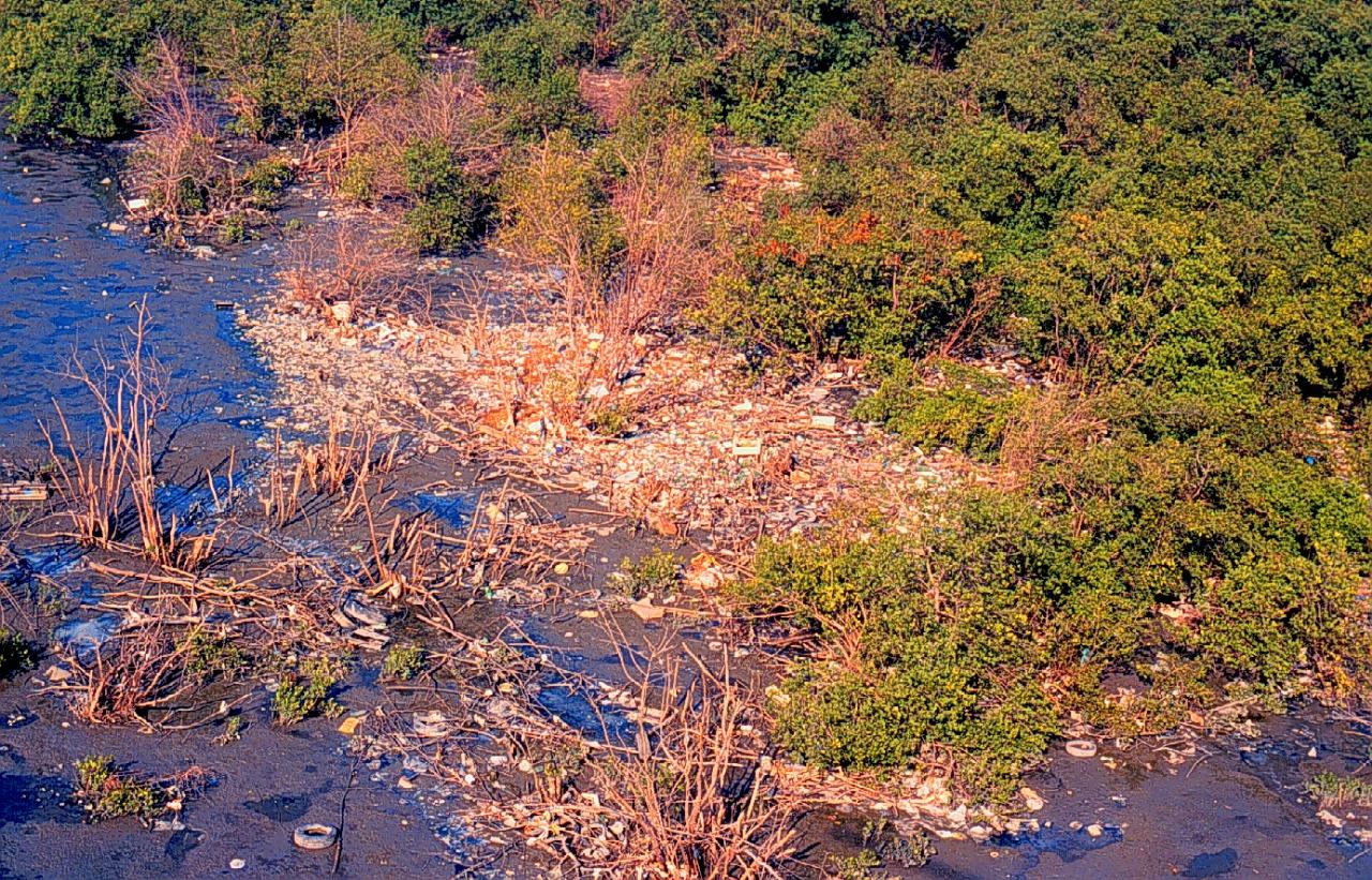 Foto mostra manguezal deteriorado em Gramacho