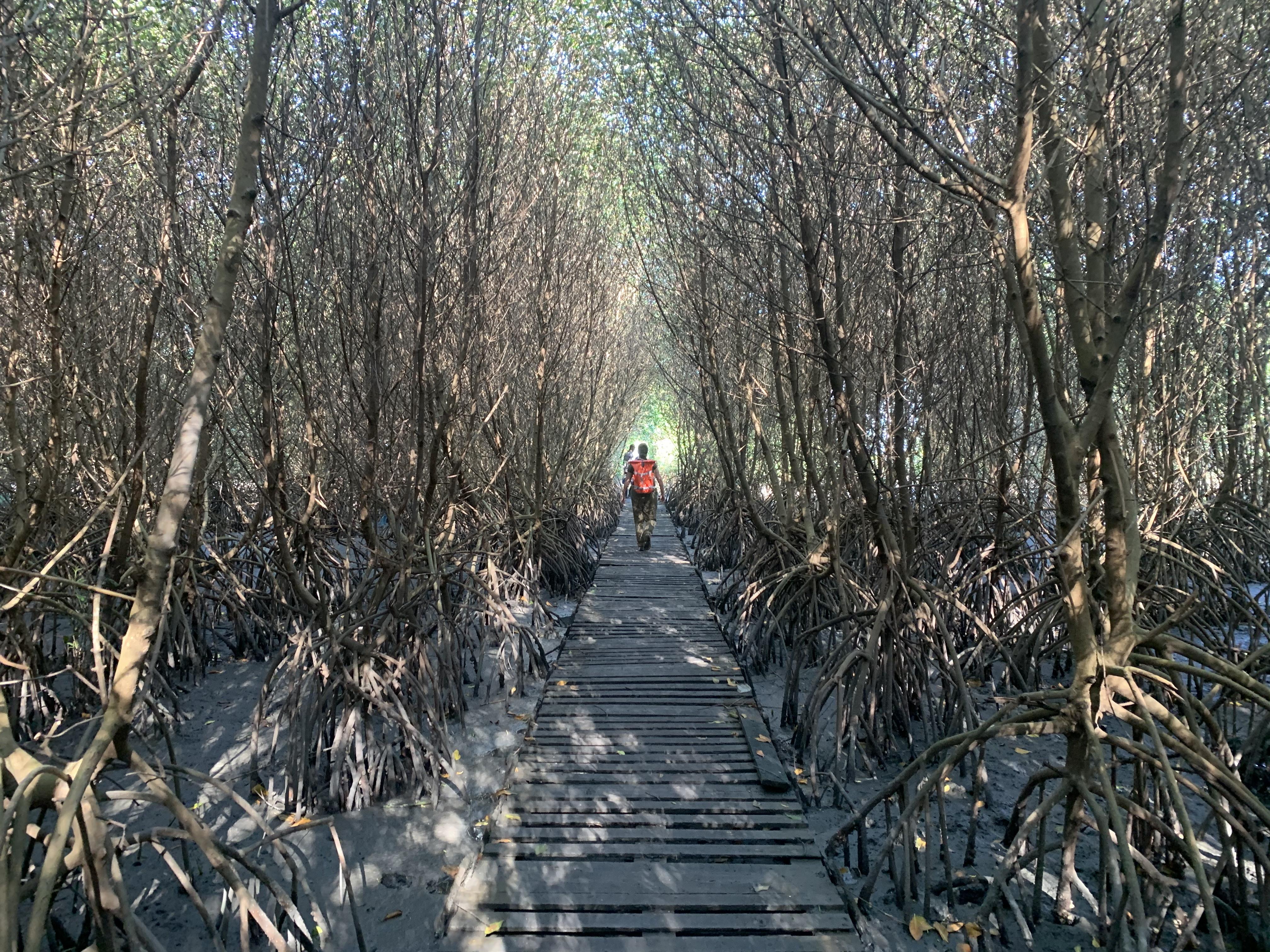 Pessoa de casaco vermelho anda entre bosque de mangues