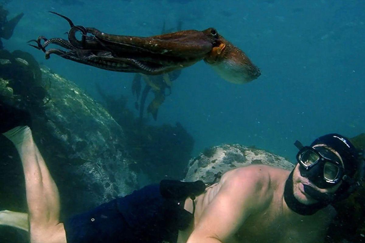 Imagem subaquática mostra mergulhador e polvo