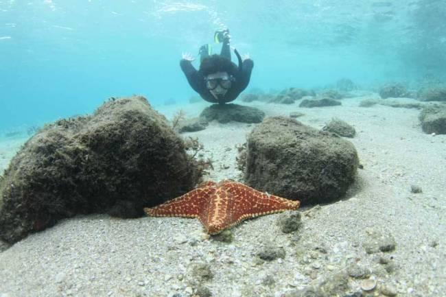 O que fazer em Palm Beach: lindeza do mergulho em Blue Heron Bridge.