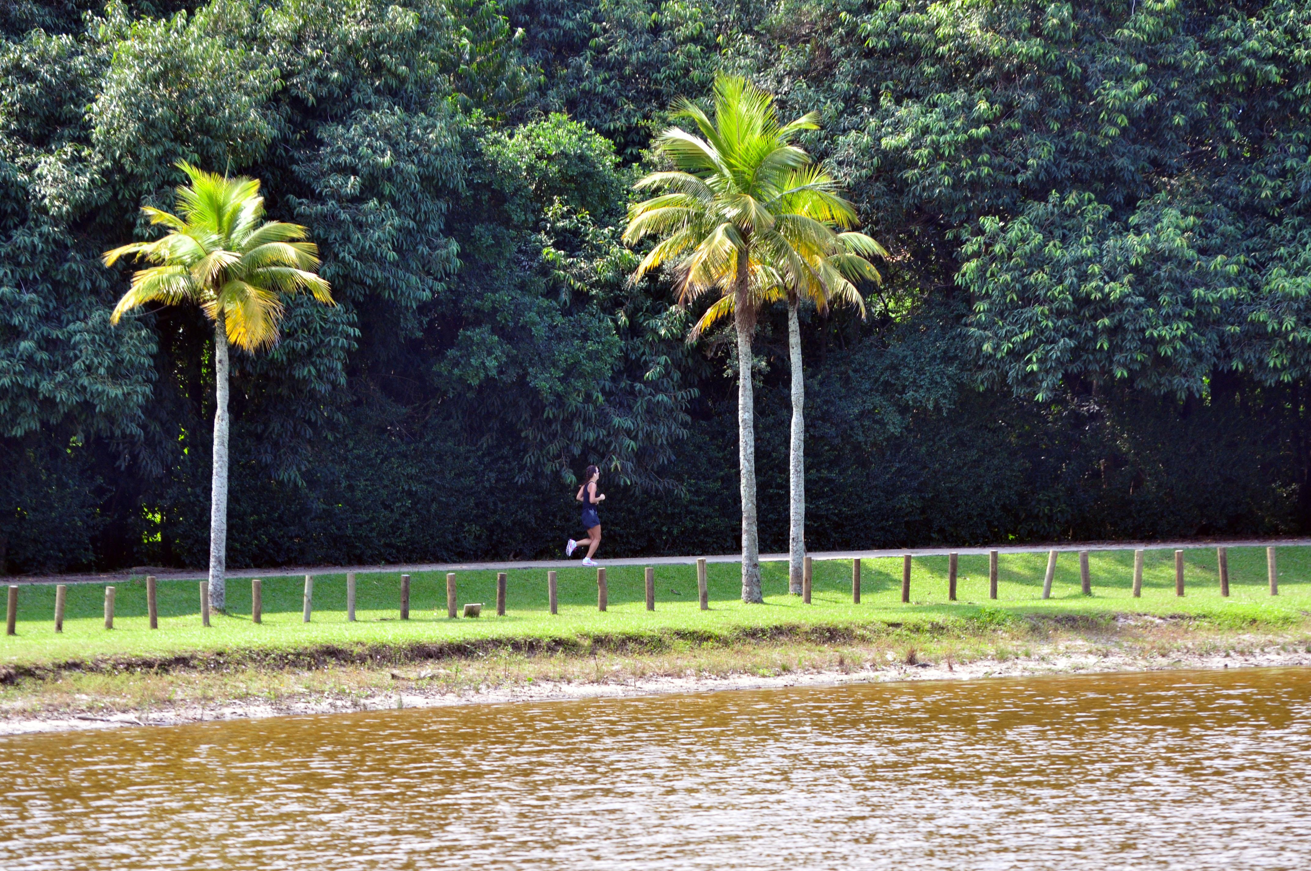 Foto mostra árvores do Bosque da Barra