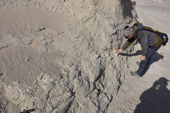 Fósseis de dinossauro encontrados
