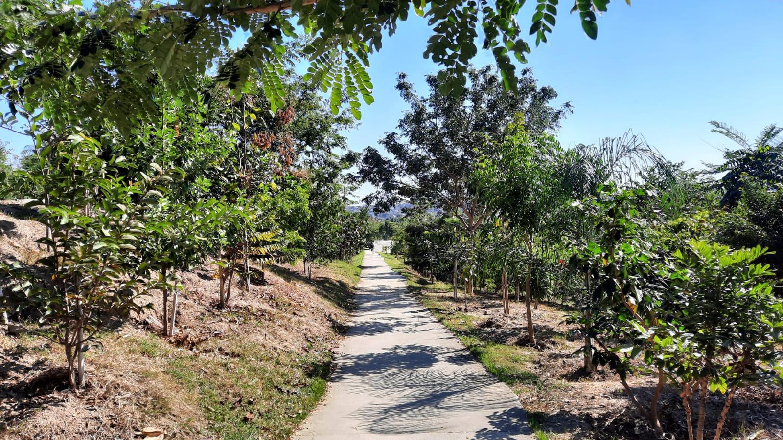 Foto mostra caminho com árvores no entorno