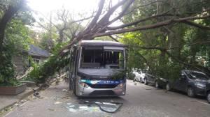 Uma árvore arrancada pela ventania em cima de um ônibus numa rua em Botafogo